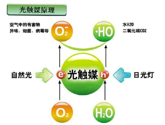 室内采用什么植物去除甲醛有效果