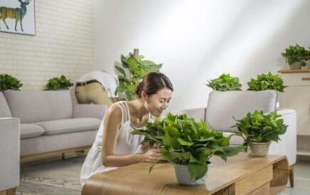 室内除甲醛的重要性及吸甲醛的植物的介绍
