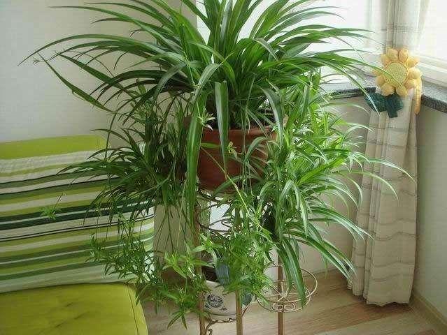 植物除甲醛